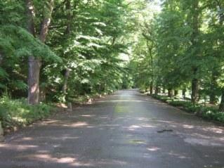 Центральная аллея. Софиевский парк